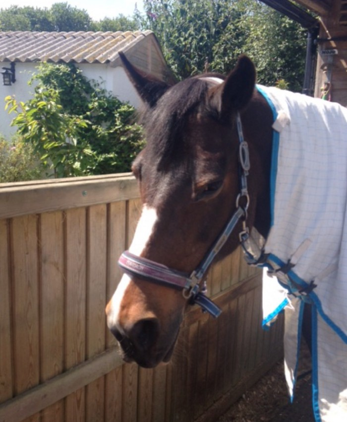 A photo of Mo earlier in the week when the sun was shining and I had to put a fly sheet on her in October!